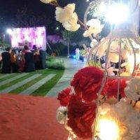 person, festival, crowd, lighting, flower, plant, petal